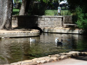 Pond in Sonoma Plaza