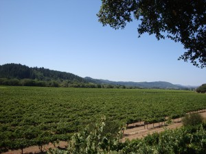 Dry Creek Valley, view from Wilson Winery