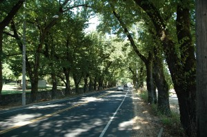 St. Helena Highway near Beringer Family Vineyards