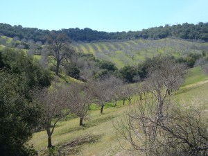 The Hills of Paso Robles Wine Country