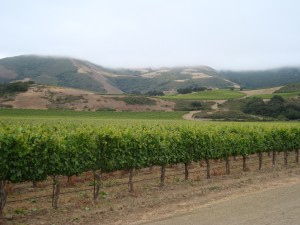 The view as you enter Sanford Winery in Santa Barbara County