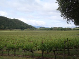 Napa Valley's Stags Leap District