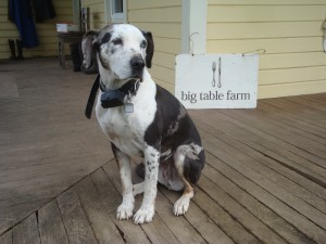 Big Table Farm