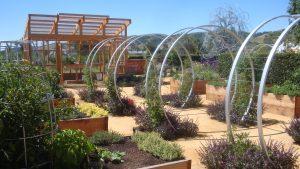 Sunset Test Garden at Cornerstone Sonoma