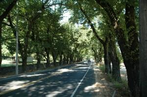 St. Helena Highway near Beringer Family Vineyards