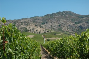Stags Leap District in Yountville