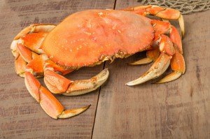 Dungeness Crab on Pier