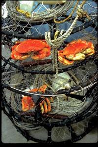 Mendocino Crabs
