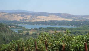 Clear Lake in Lake County with Vineyards