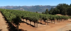 Smith-Madrone Vineyard and Winery