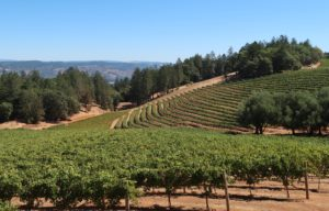Smith-Madrone Vineyards and Winery on Spring Mountain